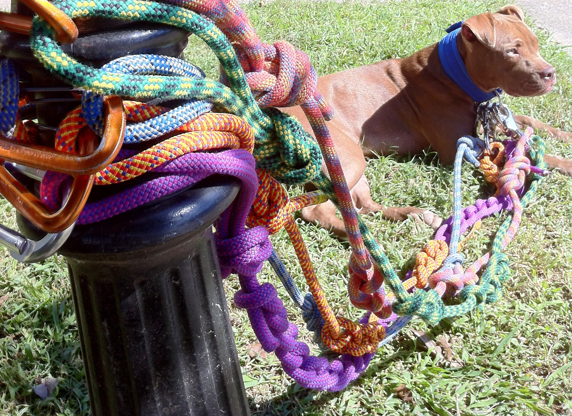 Hilbert Leads from Hilbert Durable Dog Products